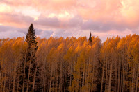 Last Light Over Aspens at Sunset, Snowbowl