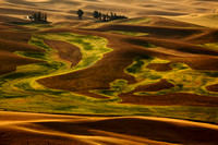 View From Steptoe Butte, Detail (No. 307)