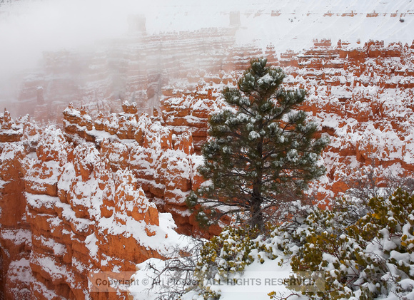 Bryce Canyon and Fog No. 239